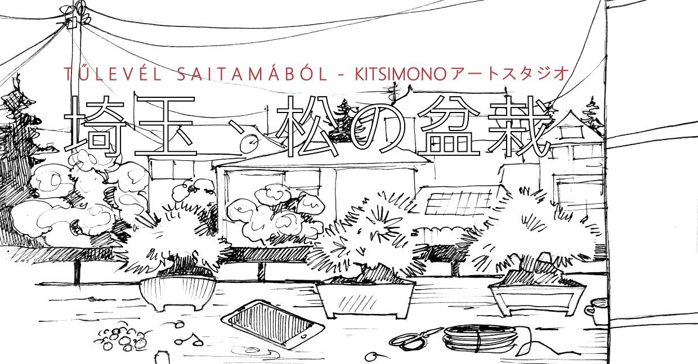 bonsai pinus matsu saitama kyoto shohin kitsimono (2)