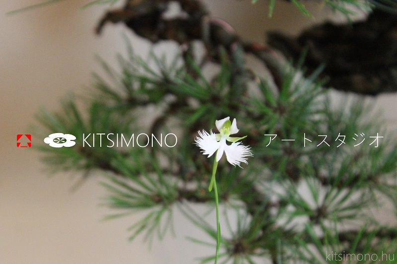 habenaria radiata modern bonsai kazari kitsimono studio