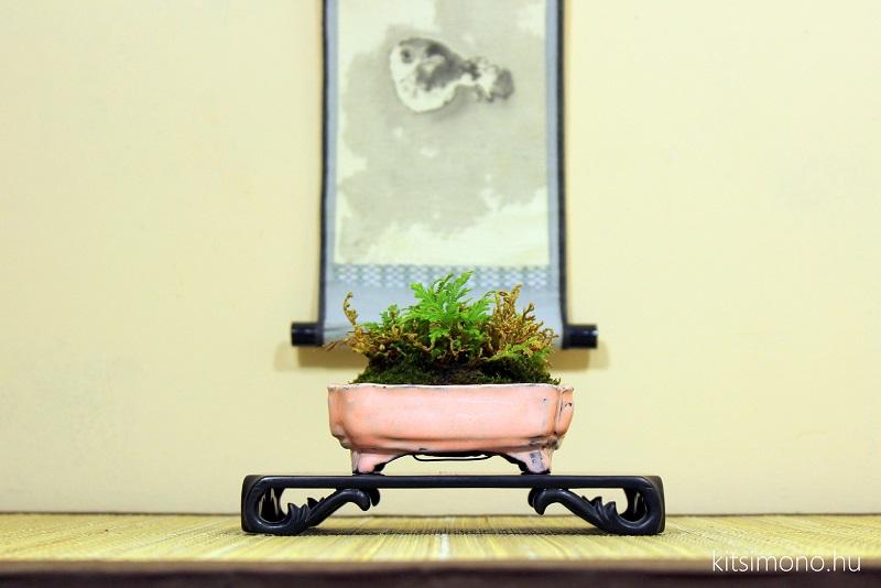 kusamono shitakusa grassbonsai grass bonsai kitsimono (26)