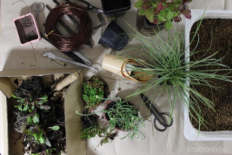 kusamono shitakusa grassbonsai grass bonsai kitsimono (29)