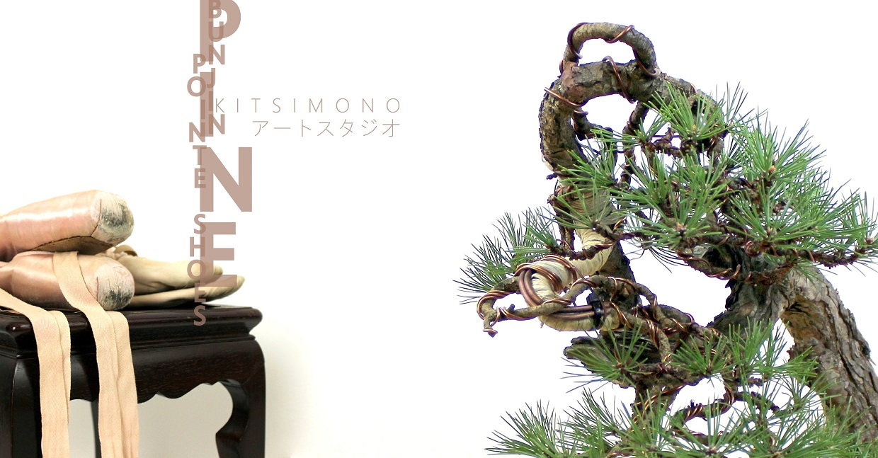 pinus bonsai ballet and styling kitsimono art studio (2)