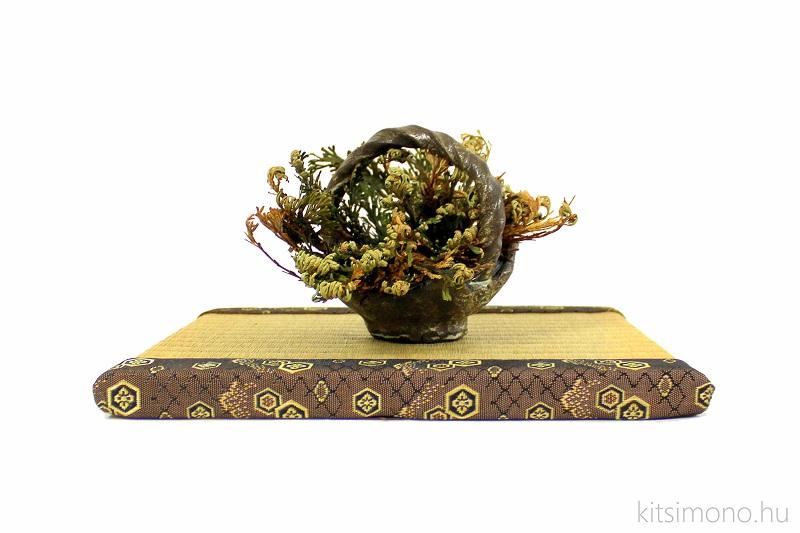 rose von jericho selaginella lepidophylla kusamono kitsimono art studio (1)